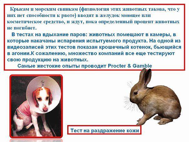 Как тестируется продукция на животных