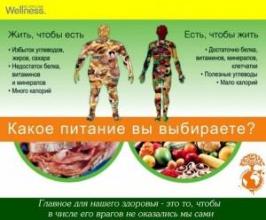есть чтобы жить, здоровое питание, рацион на день, вэлнэс
