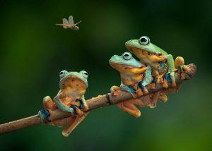 притча о трех лягушках